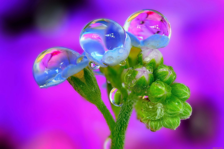 можно картинки цветы с каплями росы часто